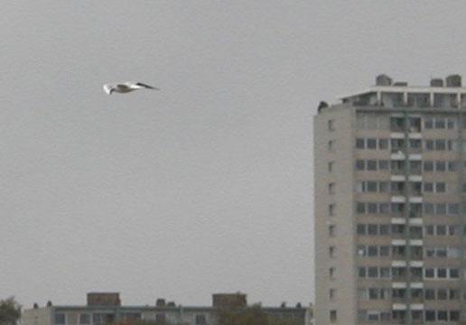 Oiseaux pris en photo BI-BD-05