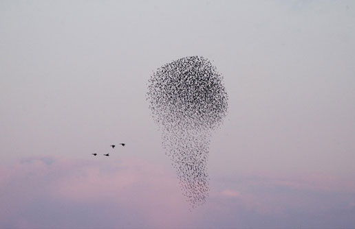 starling cloud